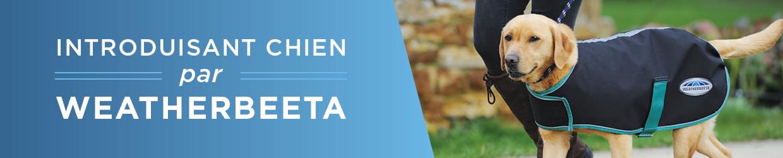 Introduisant Chien par WeatherBeeta