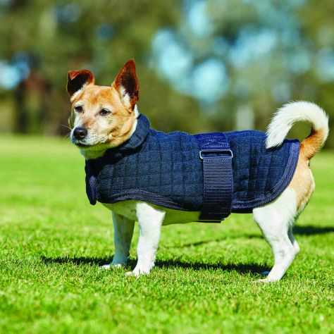 WeatherBeeta ComFiTec Thermocell Dog Coat