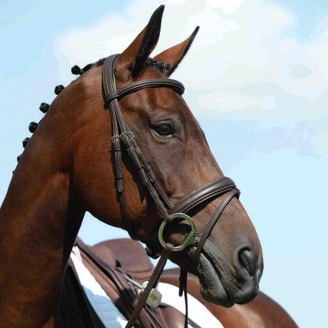 Collegiate Syntovia+ Padded Raised Flash Bridle