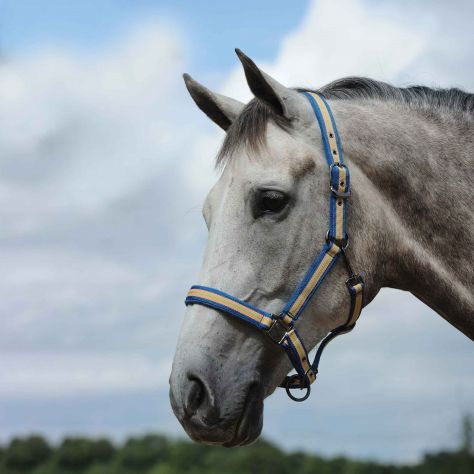 WeatherBeeta Coordinate Headcollar