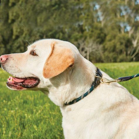 WeatherBeeta Rope Leder-Hundeleine