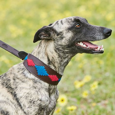 WeatherBeeta Lurcher Polo Leather Dog Collar