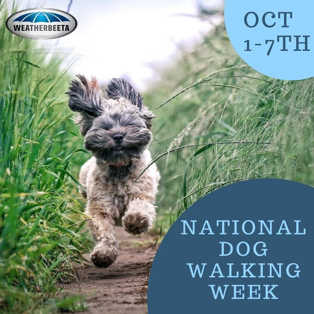 National Walk Your Dog Week 1st-7th Oct