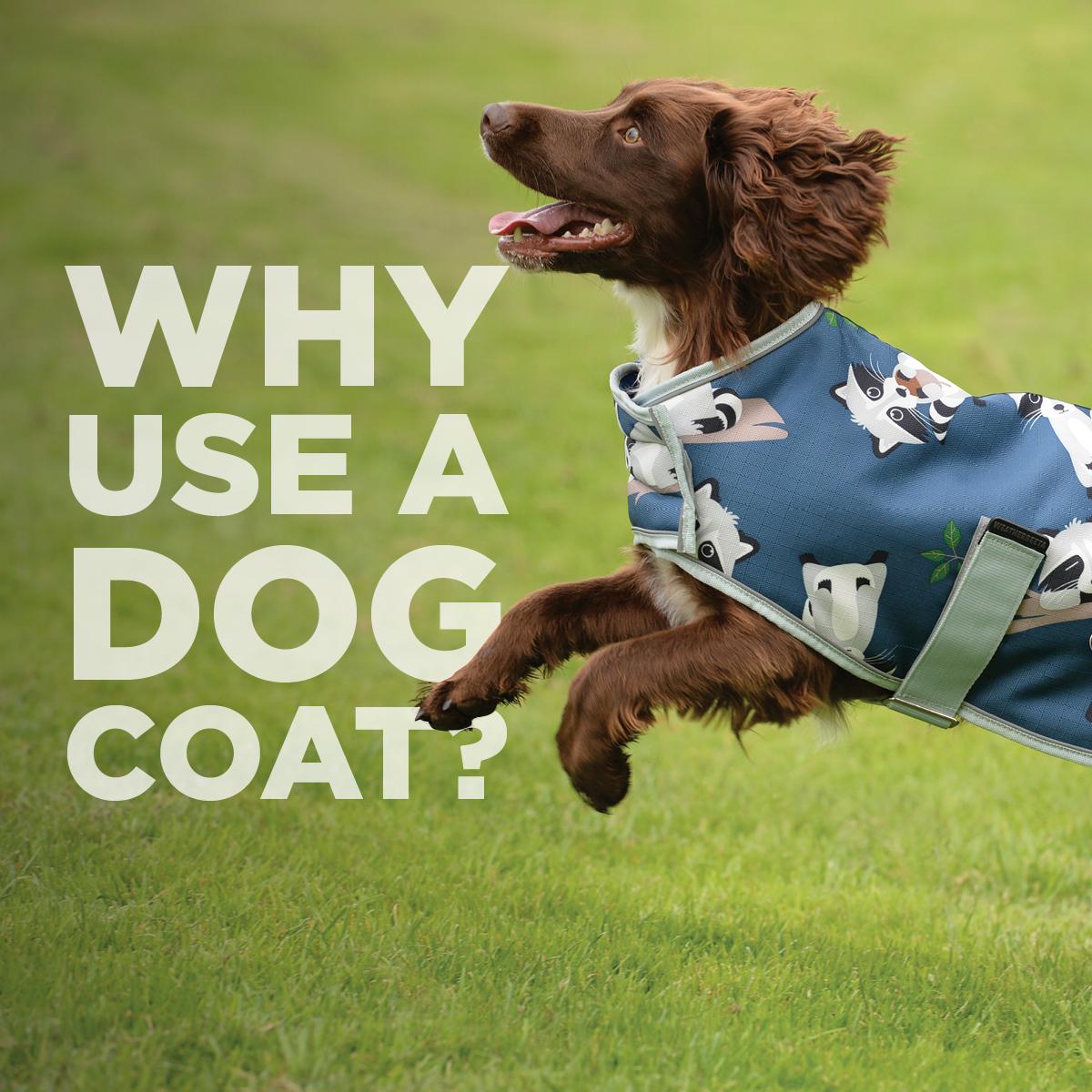 Why use a dog coat?
