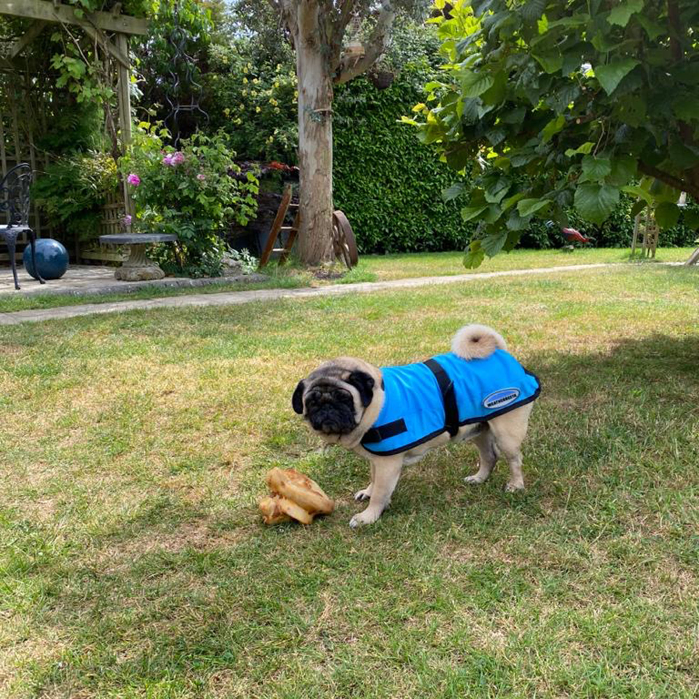 Product Review: Cooling Dog Coat