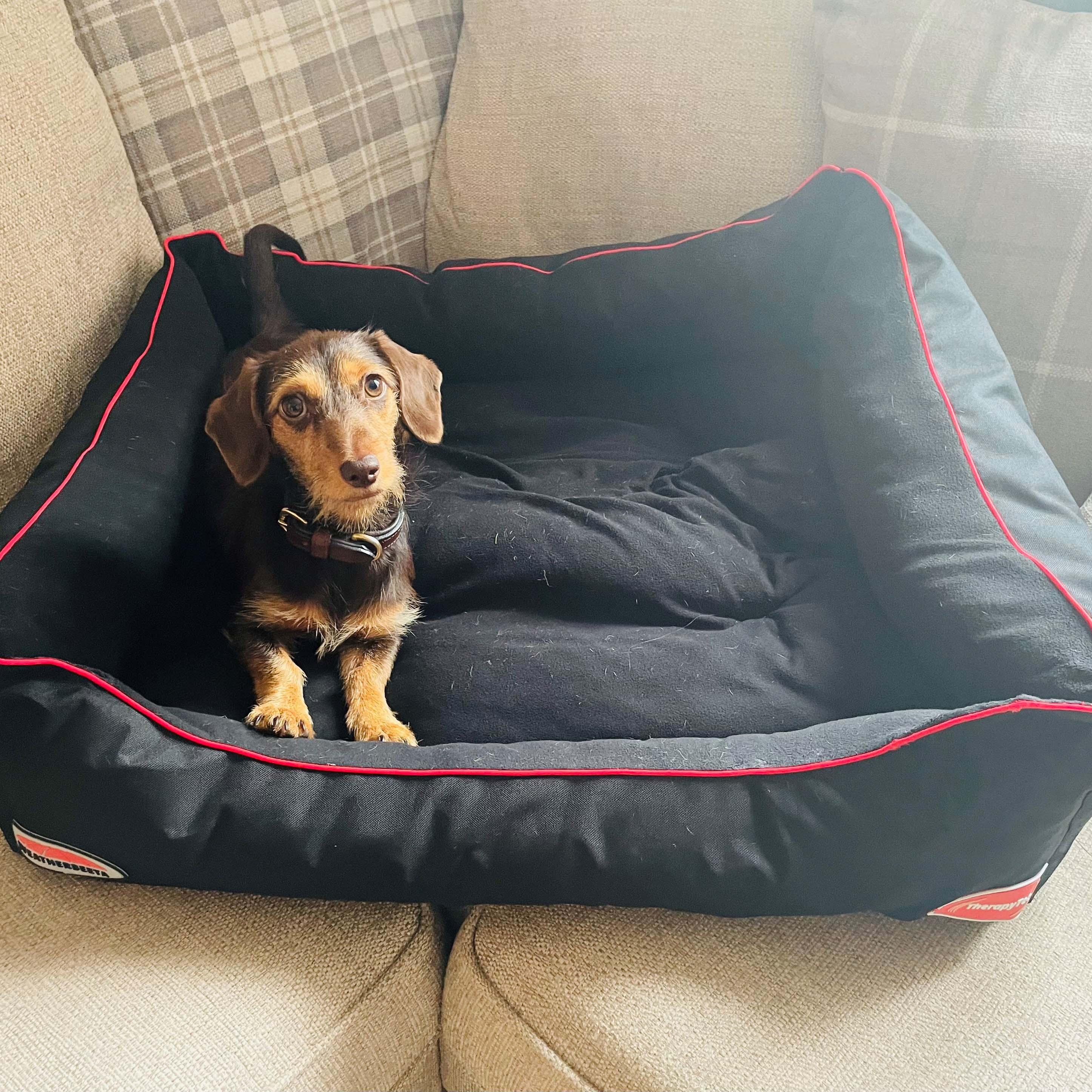 Was macht das Therapy-Tec Hundebett so effektiv?