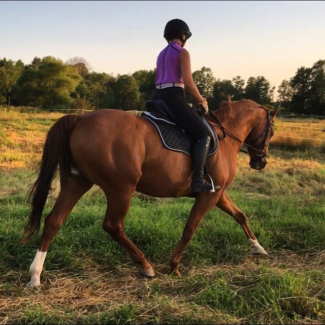 Customer Review: Rubber Reins