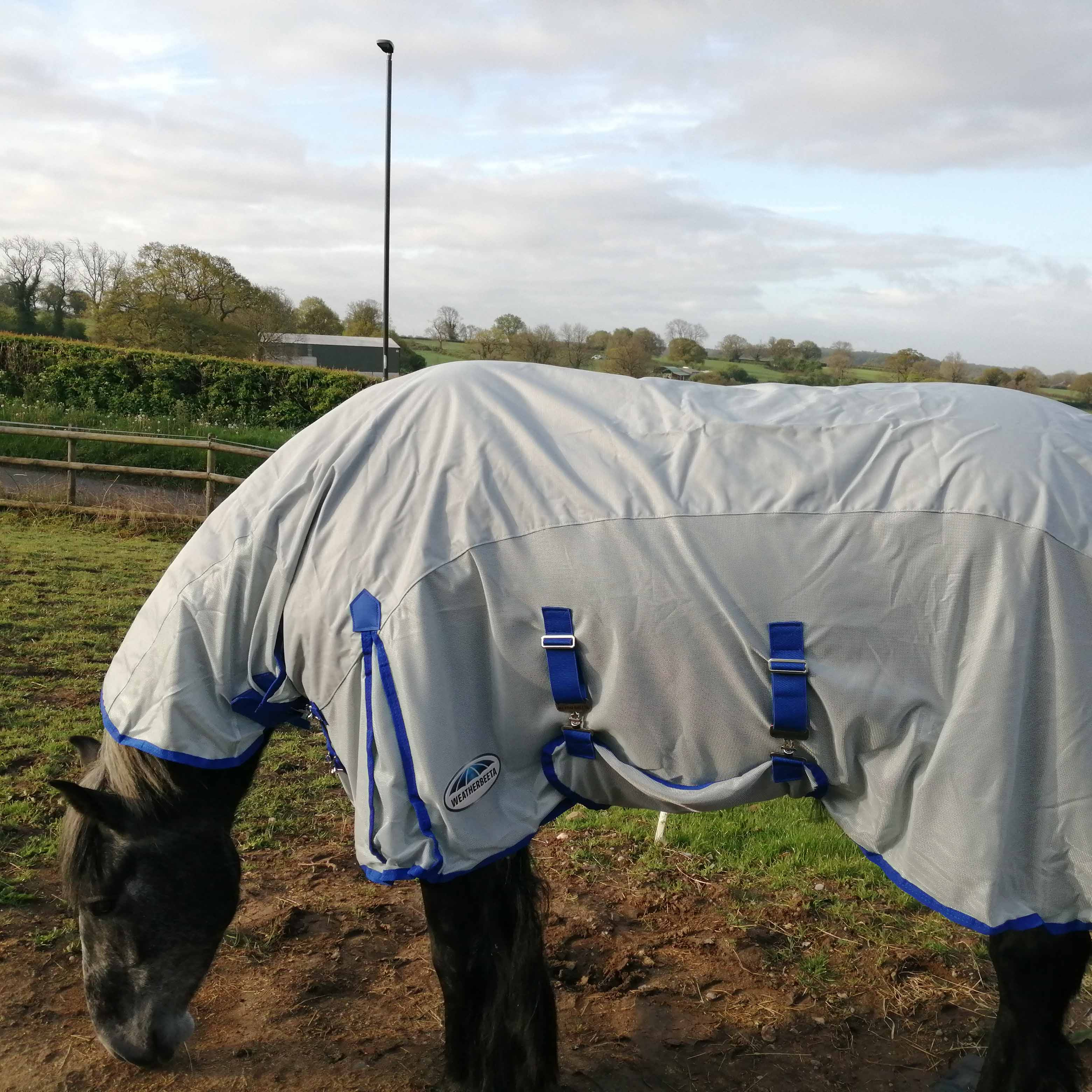 How to keep your horse cool and dry when it's hot and wet