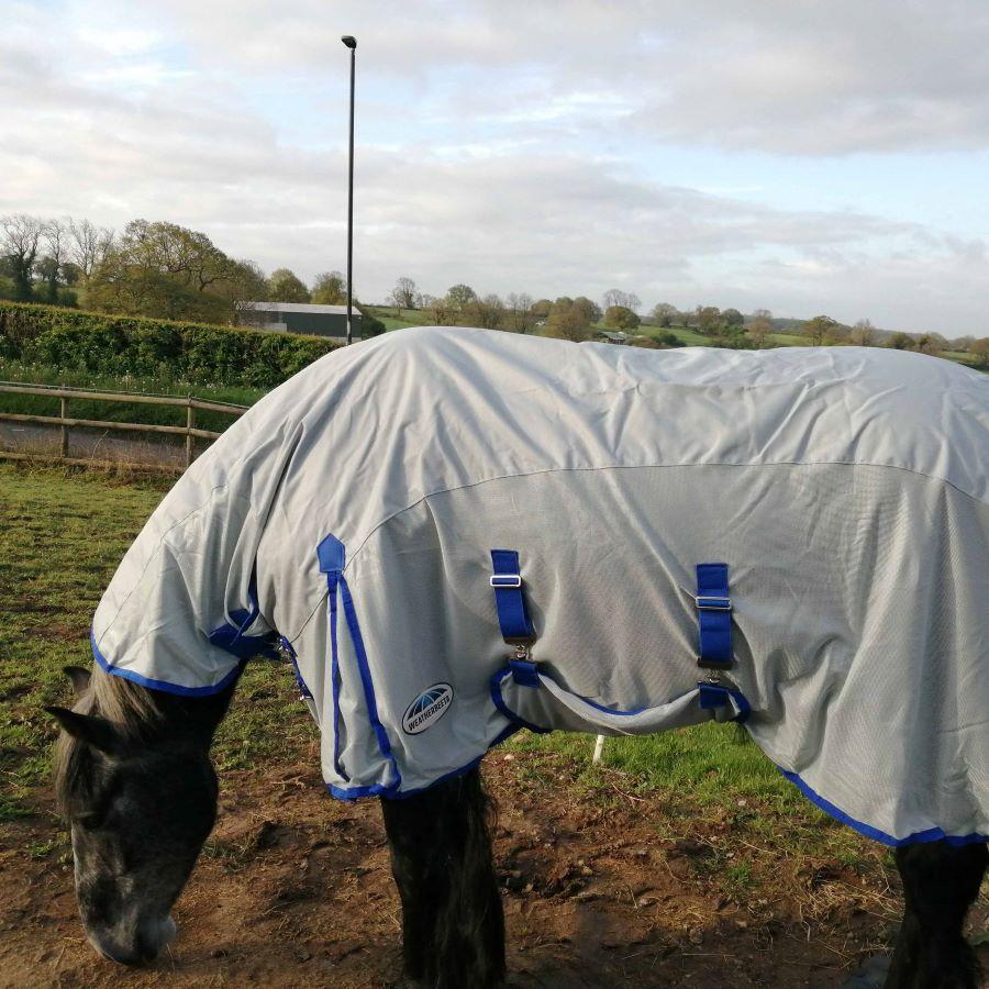 Wie schützt Du Dein Pferd an einem regnerischen Sommertag?