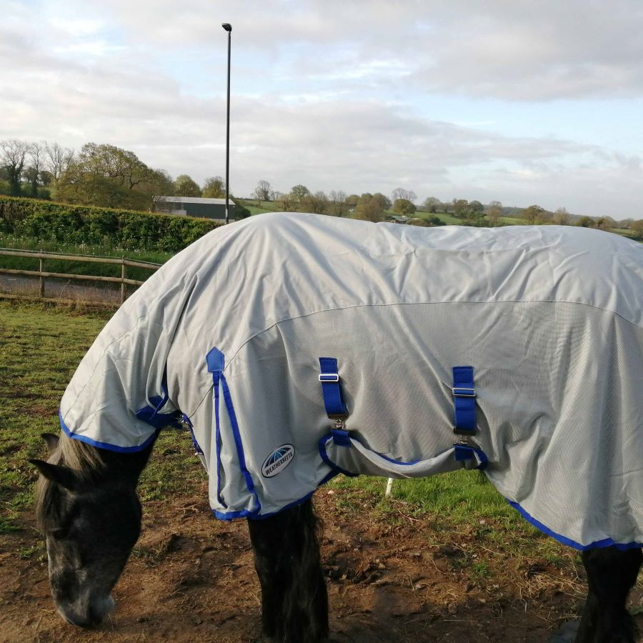 How to protect your horse on a rainy summer's day