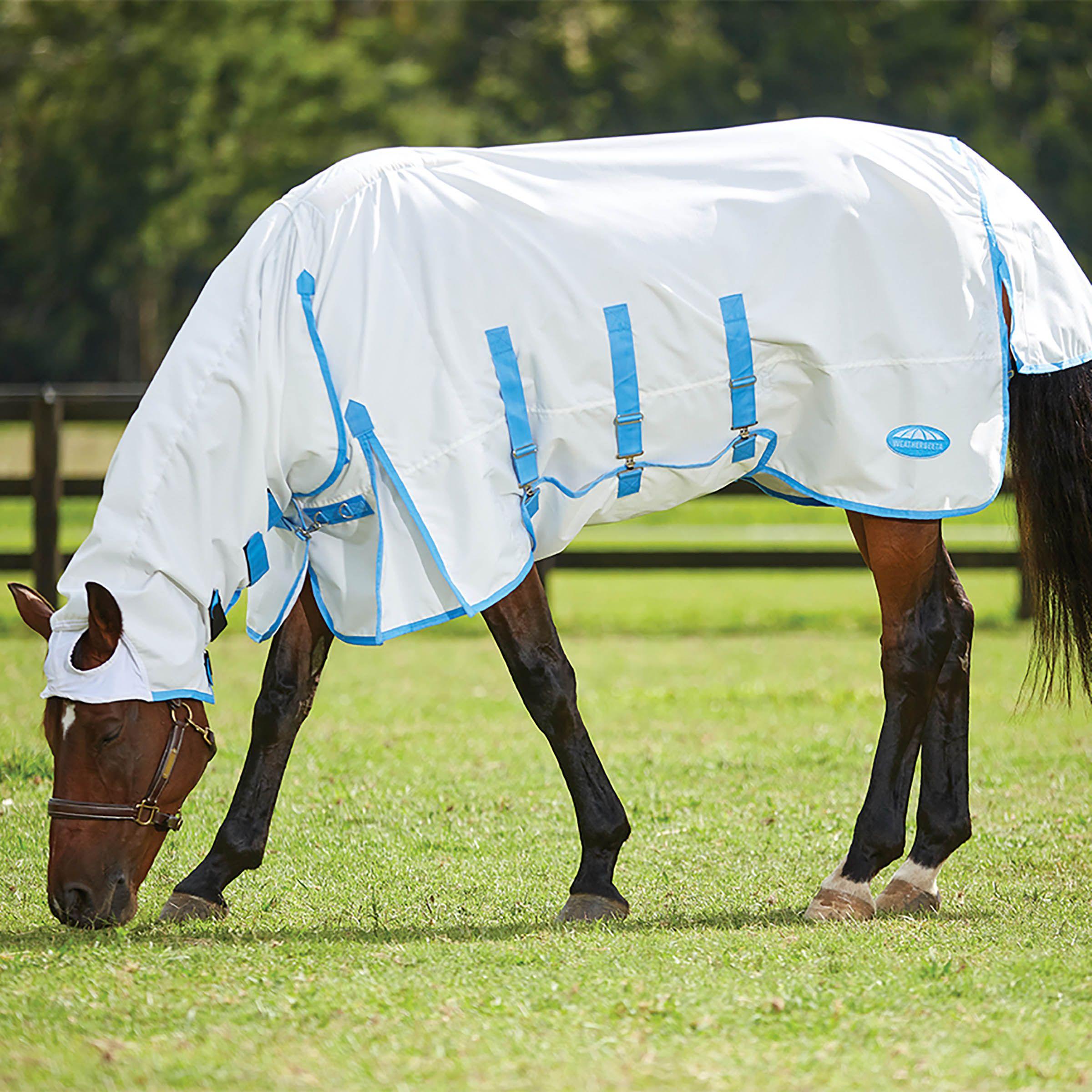 Les propriétaires de chevaux préparent pour l'été…