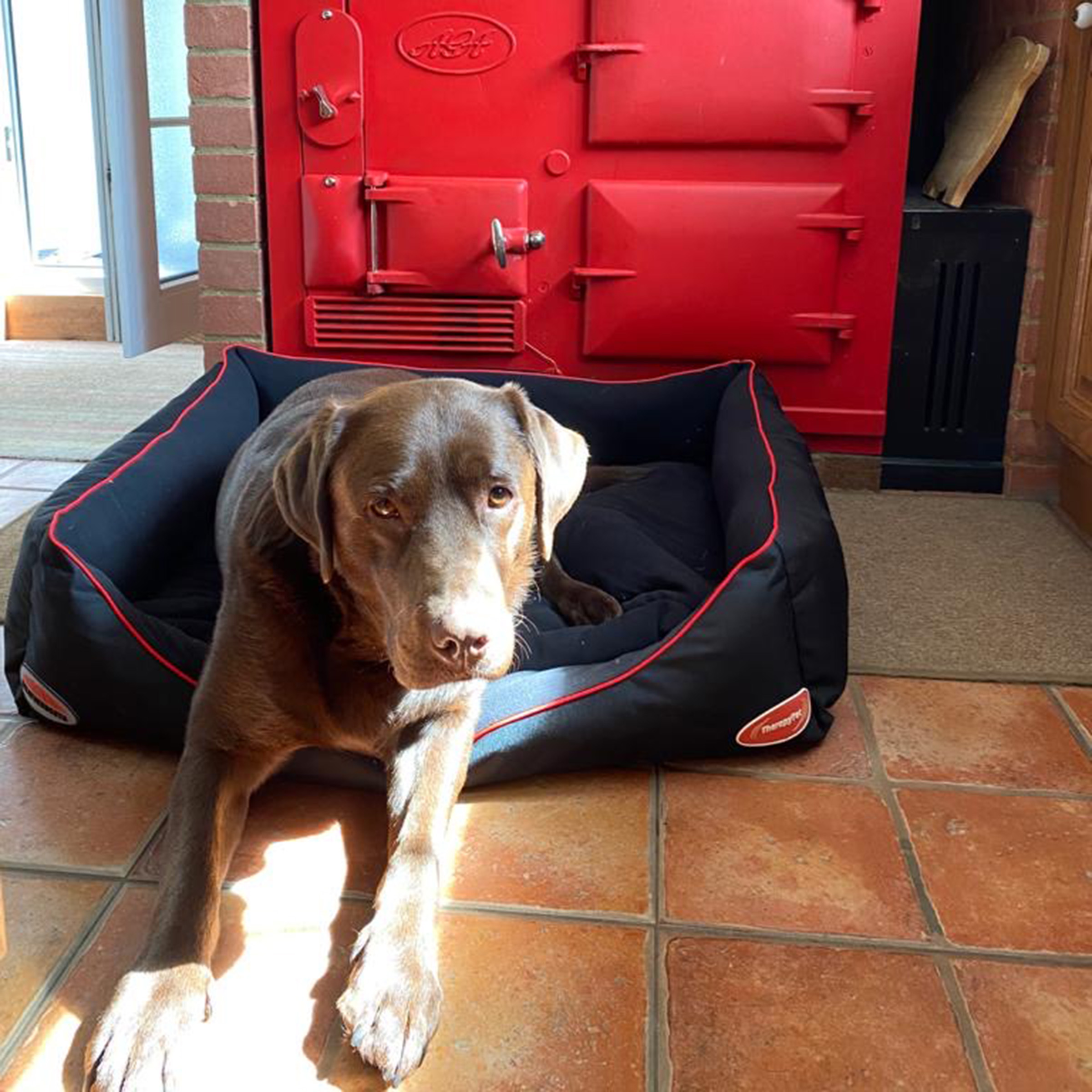 Product Review: WeatherBeeta Therapy-Tec Dog Bed