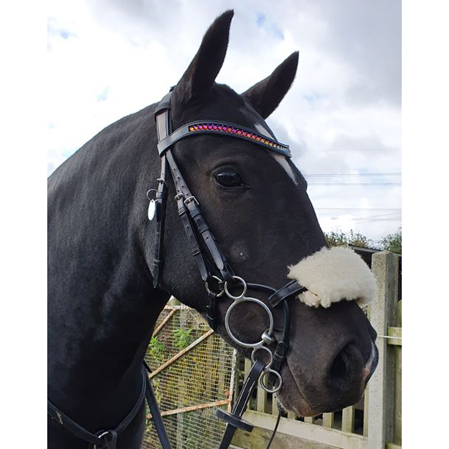 Customer Review: Collegiate ComFitec Bridle - Davina Clarke