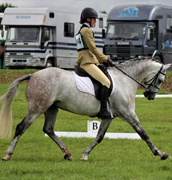 From show jumping to dressage