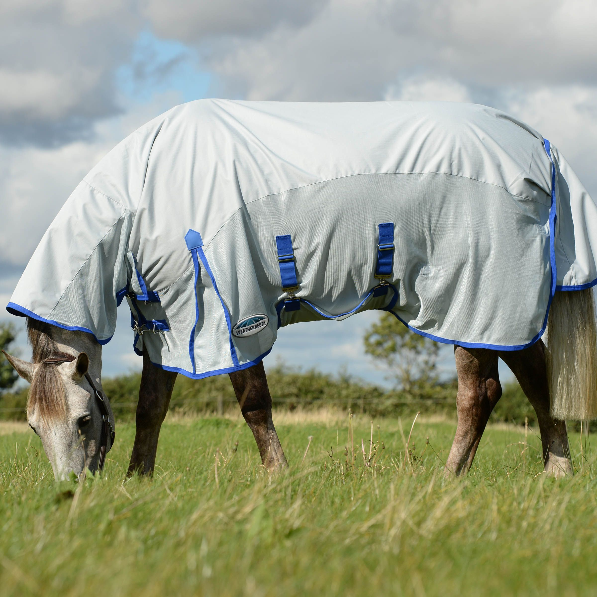 5 Reasons You Should Use a Fly Rug and a Fly Mask on Your Horse