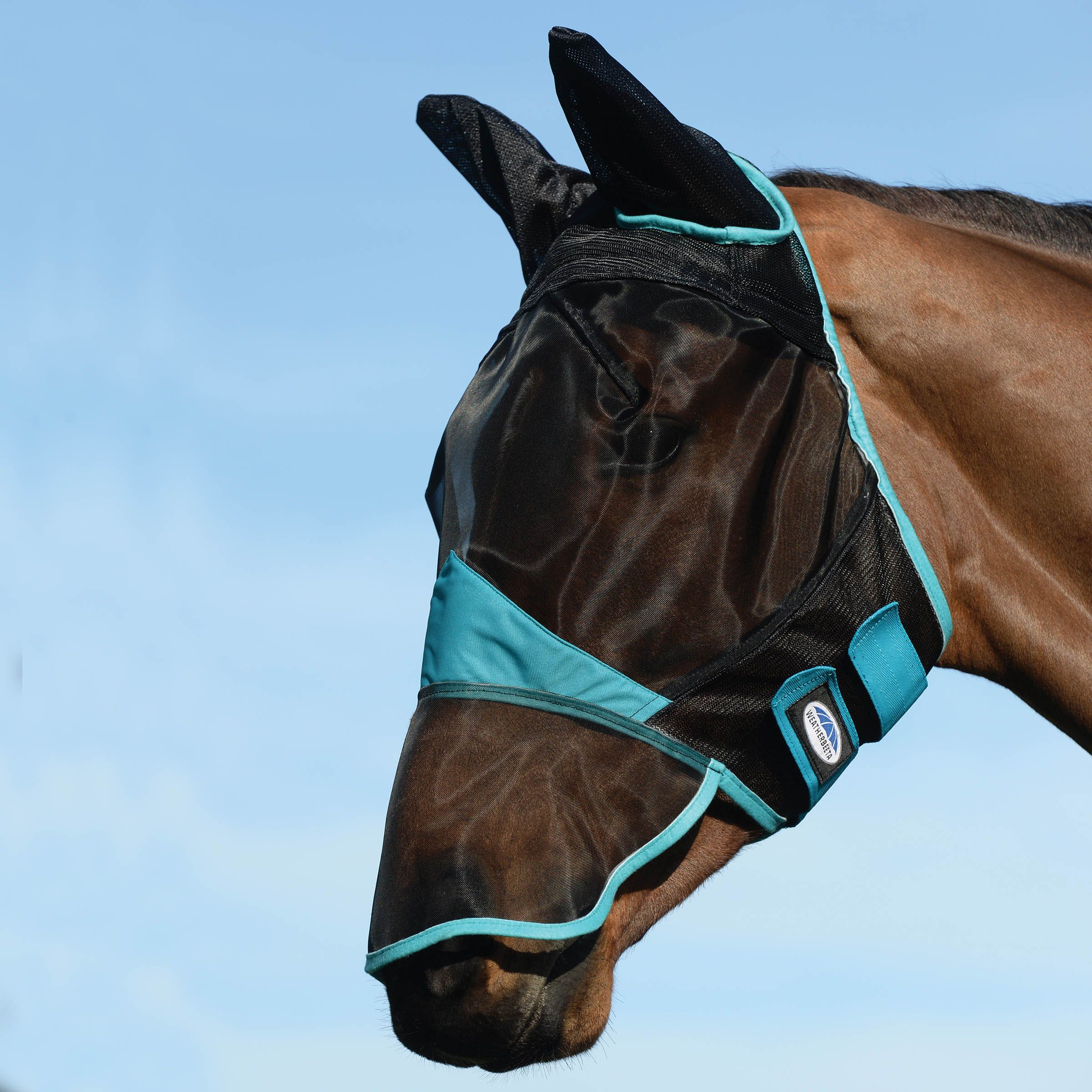 What fly mask does my horse need?