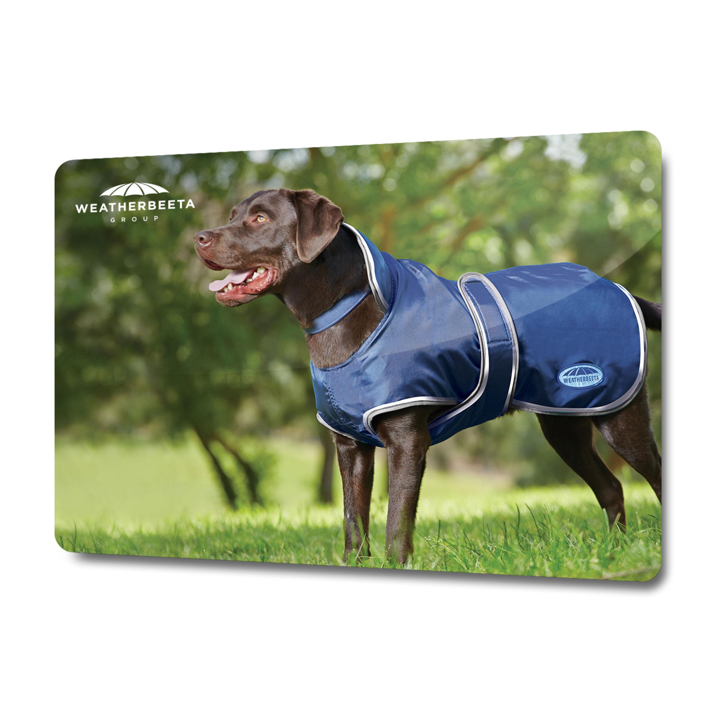 WeatherBeeta Dog