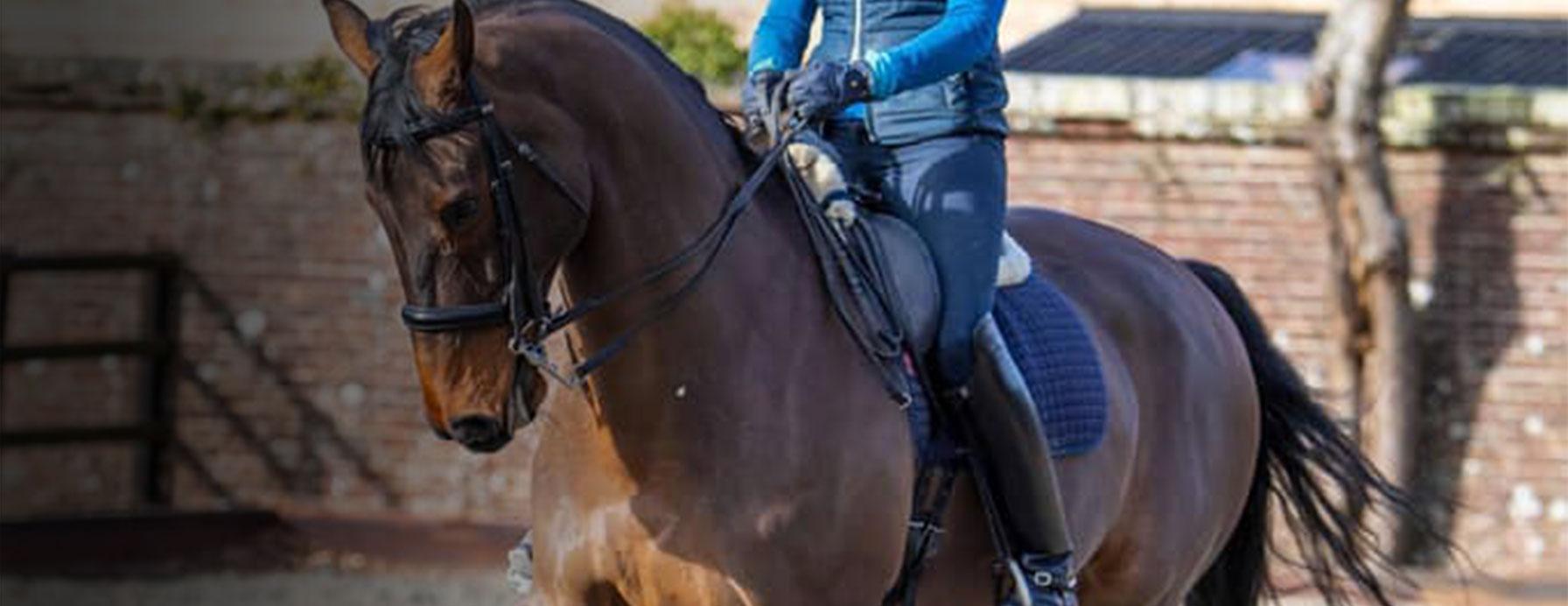 Crosby saddles
