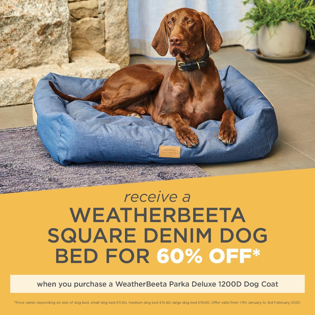 Dog Promo