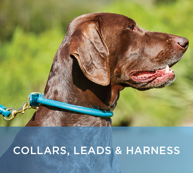 Shop Collars, Leads, Harnesses