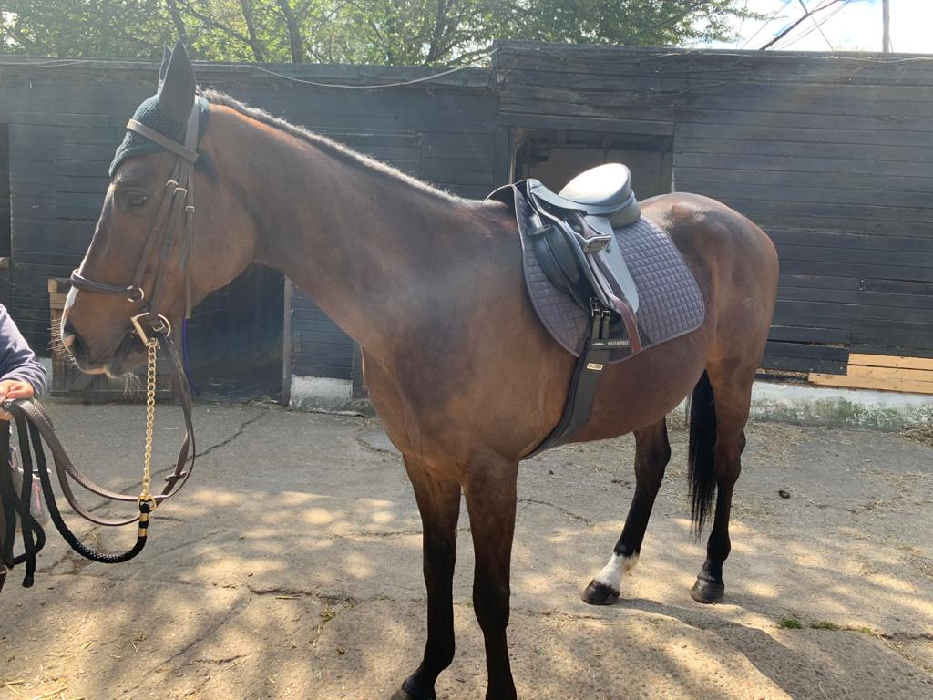 weatherbeeta and the urban equestrian academy