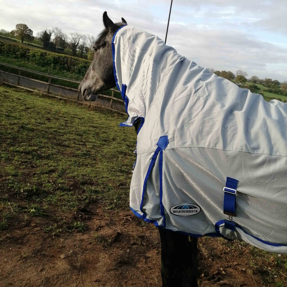 horse wearing weatherbeeta comfitec 600d/mesh rug
