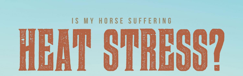 Is my horse suffering heat stress?