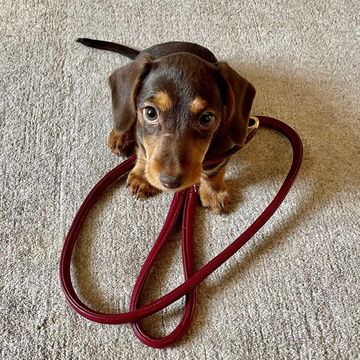 weatherbeeta rolled leather dog lead maroon