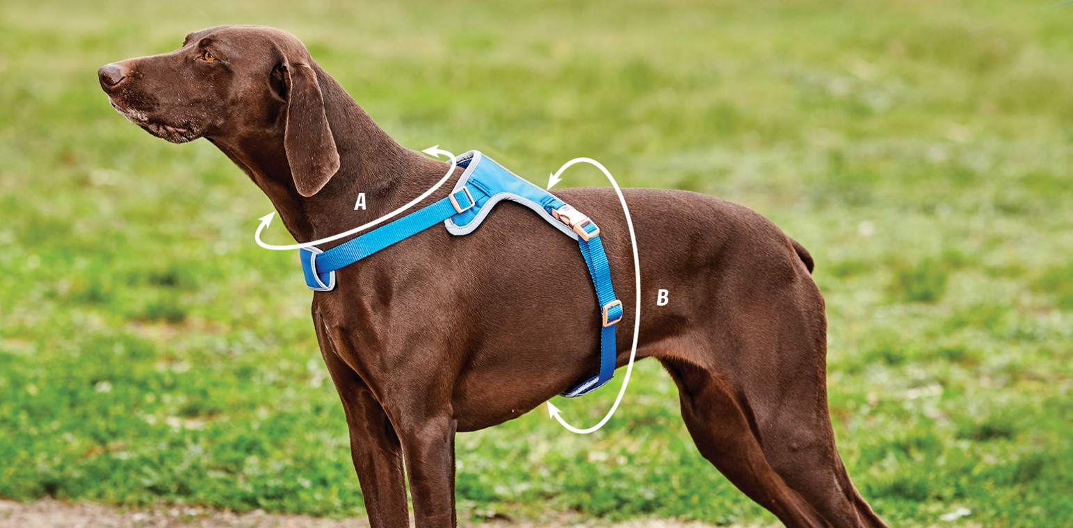 weatherbeeta elegance dog harness