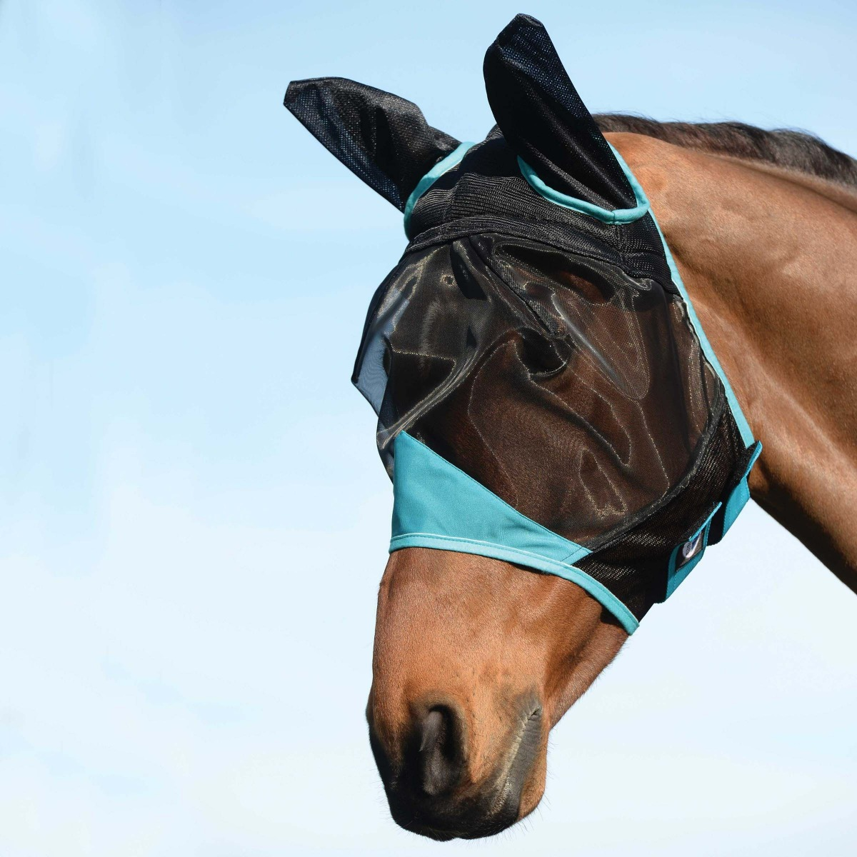 fly mask with fine mesh